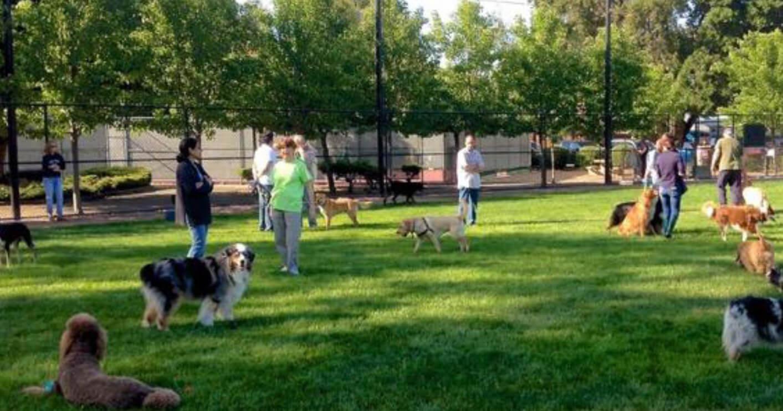 Brescia inaugurazione giardino per i cani blog di - Giardino per cani ...